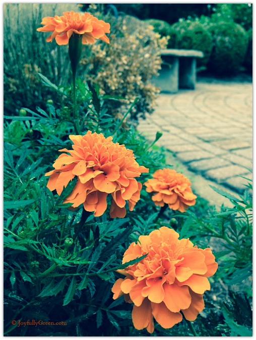 Orange Fall © Joyfully Green