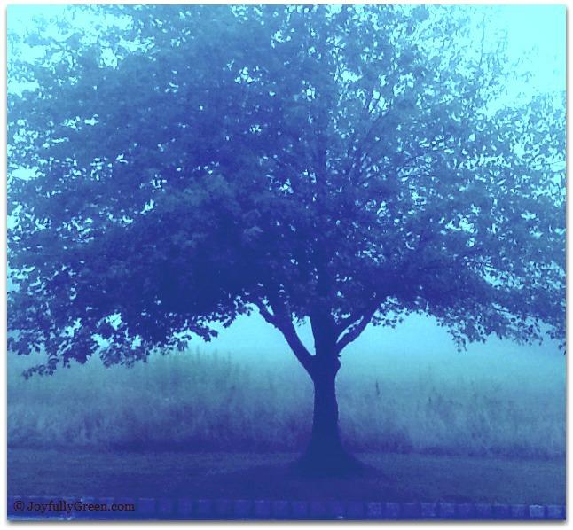Blue Tree © Joyfully Green