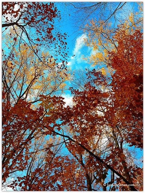 Leaves Overhead © Joyfully Green