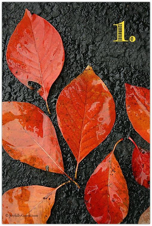 Leaf Sample 1a