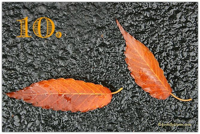 Leaf Sample 10