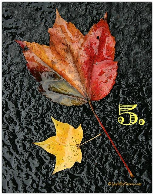 Leaf Sample 5