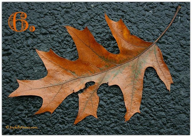 Leaf Sample 6