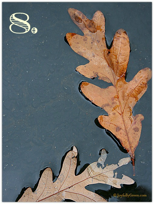 Leaf Sample 8