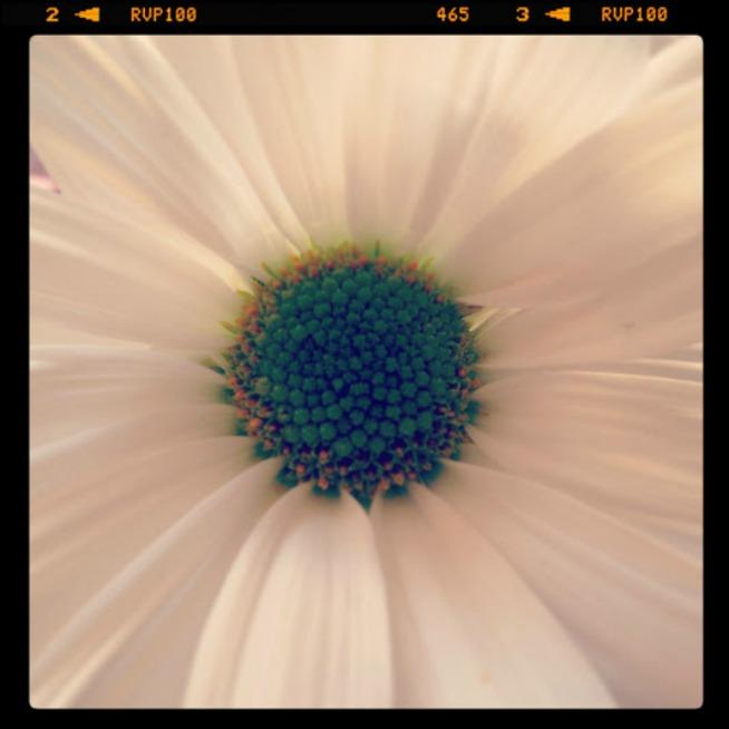 Copyright Kat Denton White Flower Framed