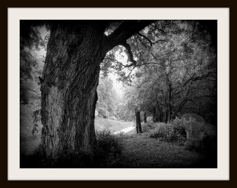 Copyright Phyllis Johnson Maple Tree Holga Framed