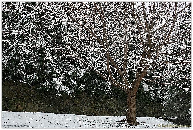 Tree in Winter by Joyfully Green LLC