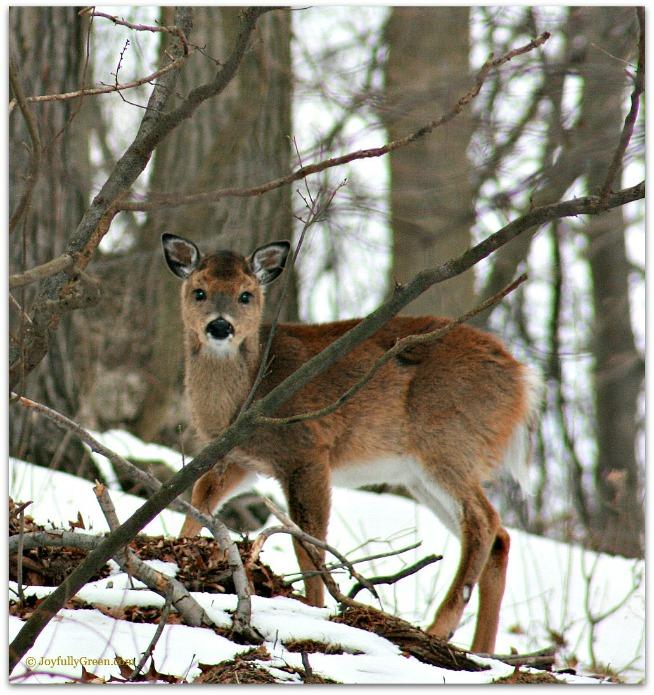 Deer 2 by Joyfully Green