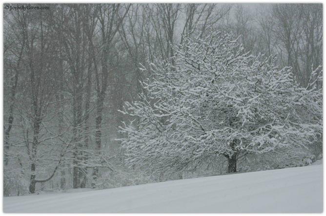 March Snow 4 © Joyfully Green LLC