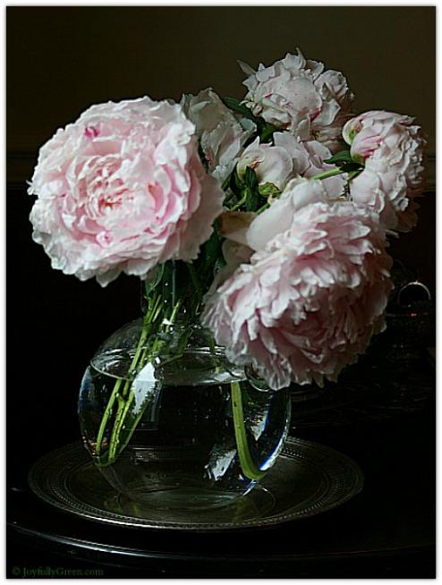 Pink Peonies in Vase 2 © Joyfully Green LLC