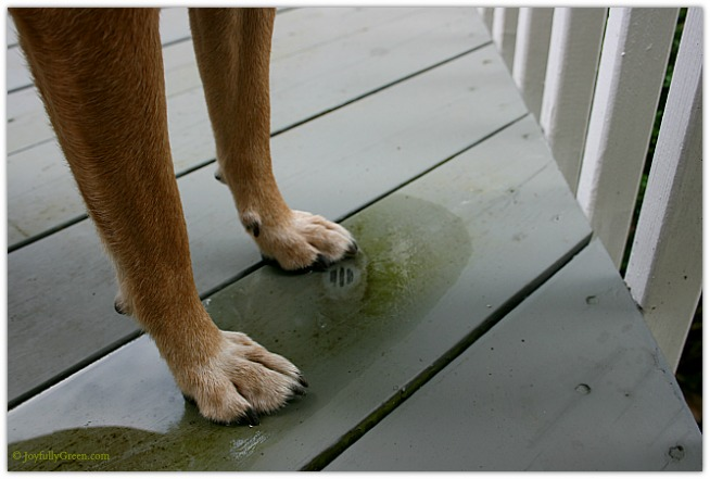 Dog Paws © Joyfully Green LLC