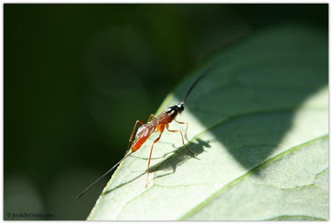 Red Bug © Joyfully Green LLC