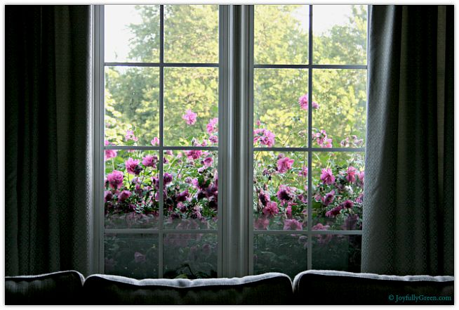 Rose of Sharon View © Joyfully Green LLC