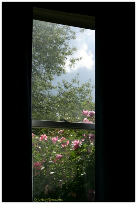Clouds and Rose of Sharon © Joyfully Green LLC