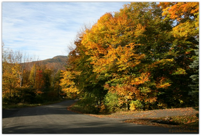 Catskills Road_4130 © Joyfully Green LLC