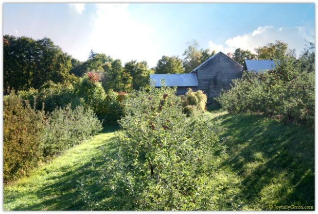Catskills Barn-Clouds 4041 © Joyfully Green LLC