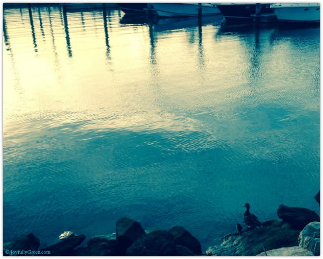 Ducks © Joyfully Green LLC