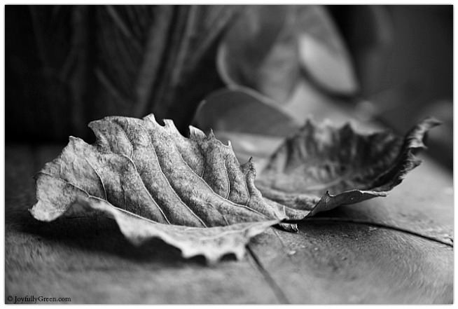 Leaves Monochrome © Joyfully Green LLC