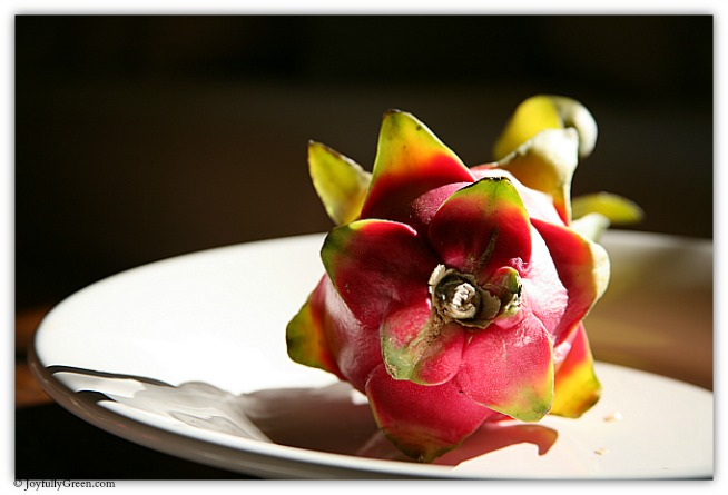 Dragon Fruit 4 IMG_7349 © Joyfully Green LLC