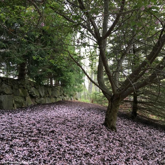 Pink Tree © Joy Sussman Joyfully Green LLC