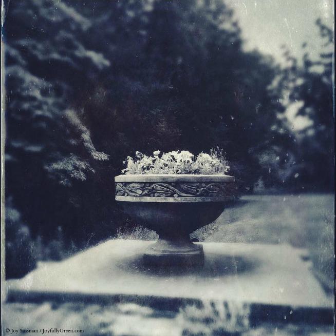 Flower Urn © Joy Sussman Joyfully Green LLC