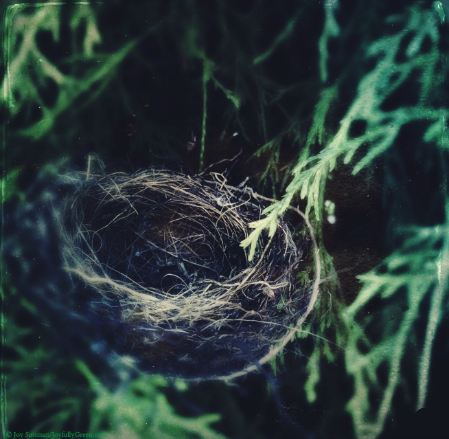 Birds Nest © Joy Sussman Joyfully Green LLC
