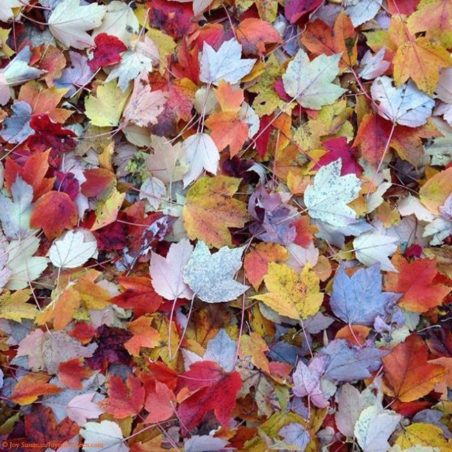 Leaf Confetti © Joy Sussman - Joyfully Green LLC
