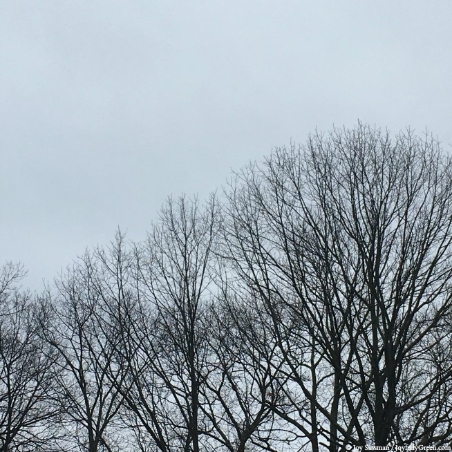 Winter Trees in February © Joy Sussman - Joyfully Green LLC