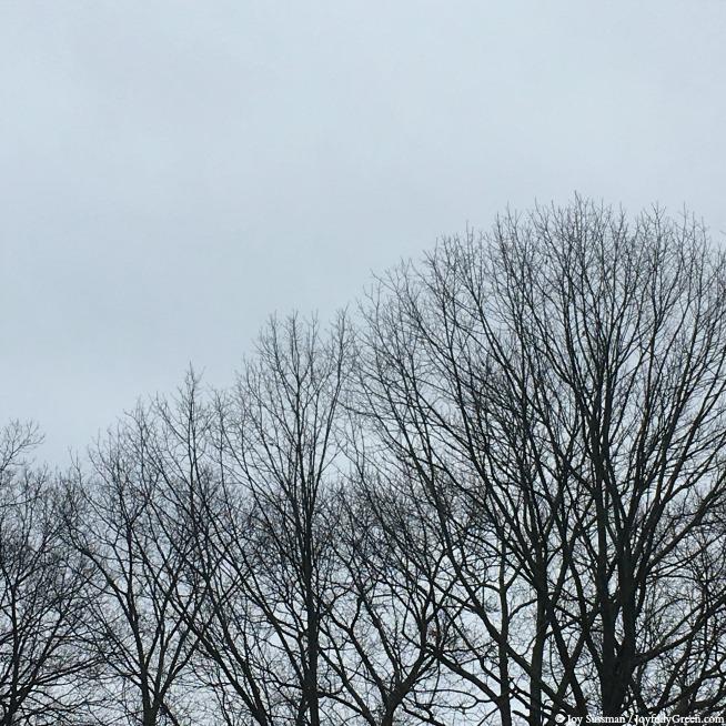 Winter Trees in February © Joy Sussman - Joyfully Green LLC