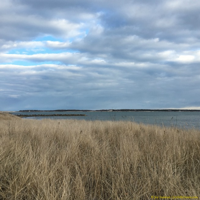 Cape Cod Marsh © Joy Sussman - Joyfully Green LLC