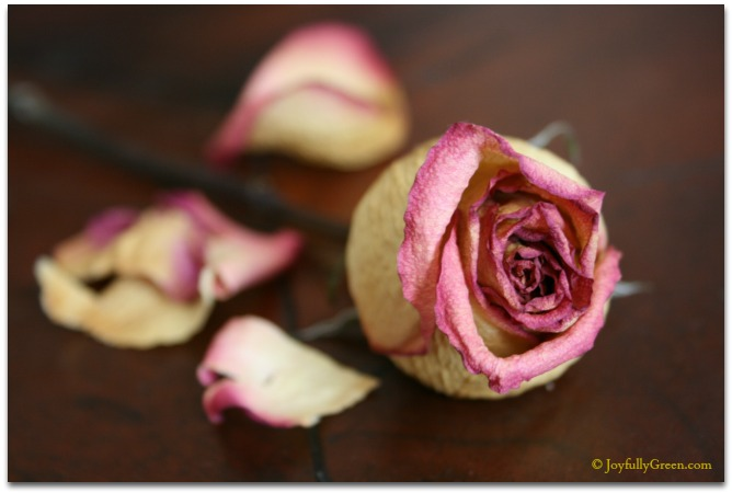 Dried Rose © Joyfully Green