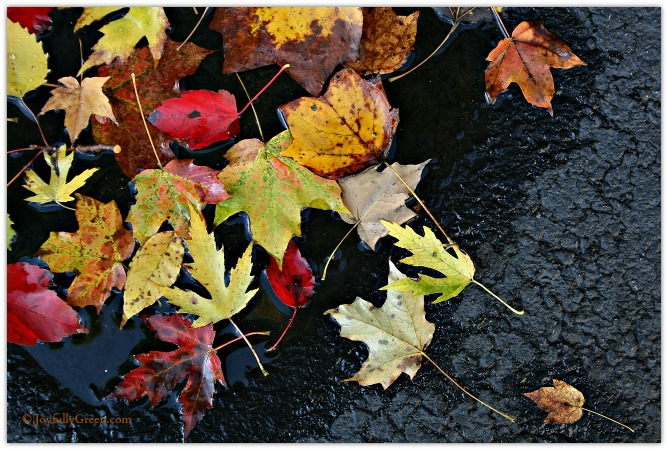 Autumn Confetti © Joyfully Green