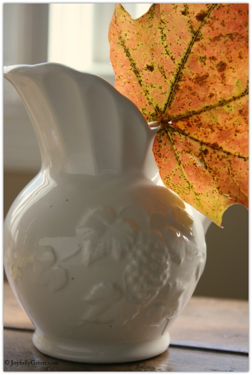 Leaf in White Pitcher © Joyfully Green