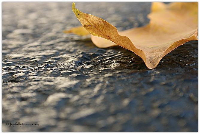 Gold Leaf © Joyfully Green