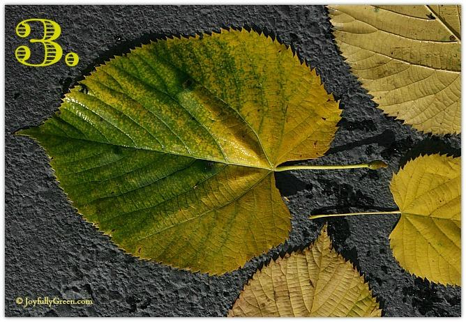 Leaf Sample 3
