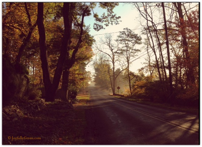 Country Road by Joyfully Green
