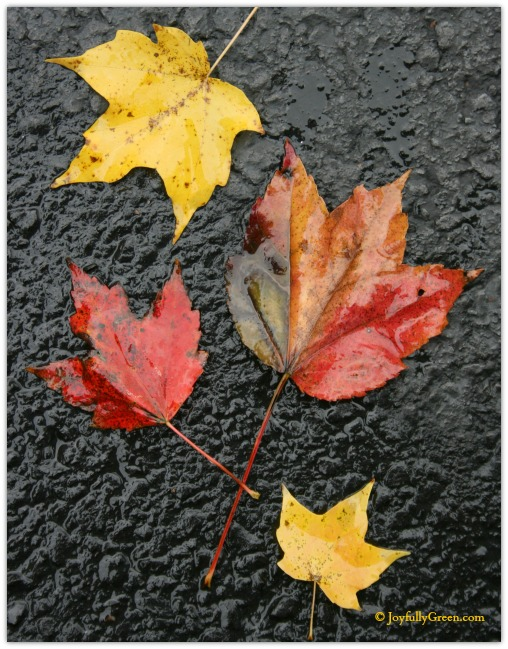 Leaves in Rain by Joyfully Green