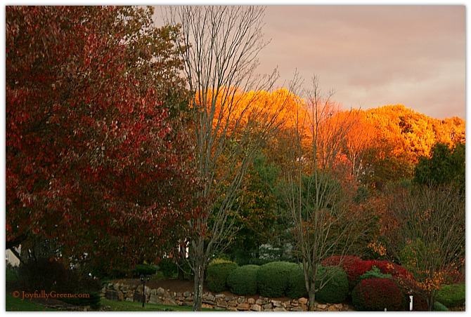 Fall Foliage by Joyfully Green LLC