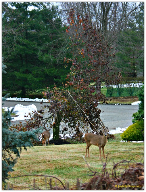 Deer with Tree by Joyfully Green