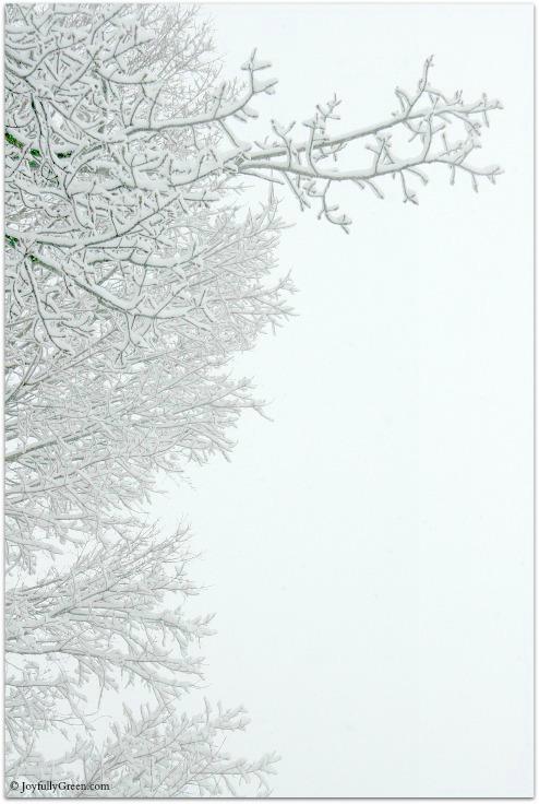 Snowy Branches © Joyfully Green LLC