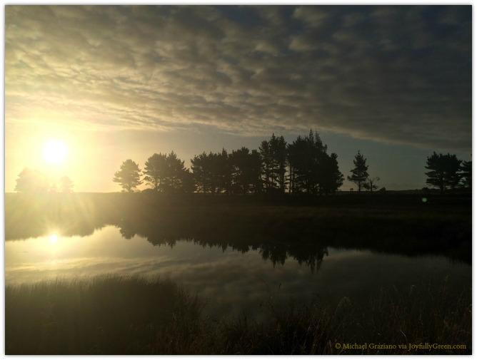 © Michael Graziano-New Zealand Golden Sunset
