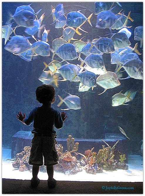 Aquarium by Joyfully Green LLC