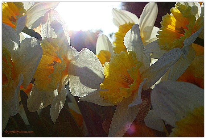 Spring Flowers © Joyfully Green LLC