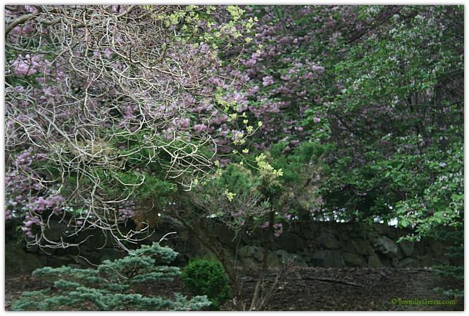 Tangled Eden © Joyfully Green LLC
