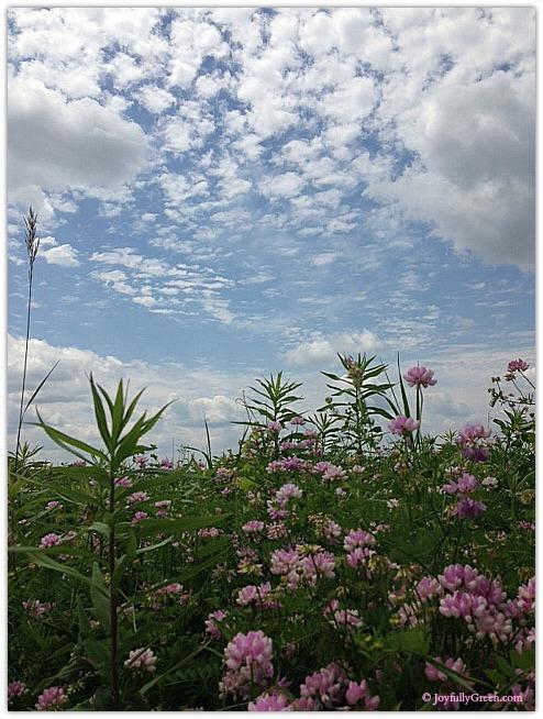 Field of Flowers 3 © Joyfully Green LLC