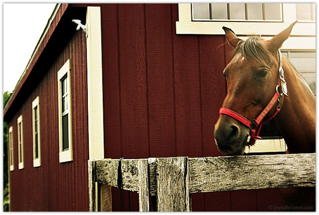 Horse at Orchard © Joyfully Green LLC