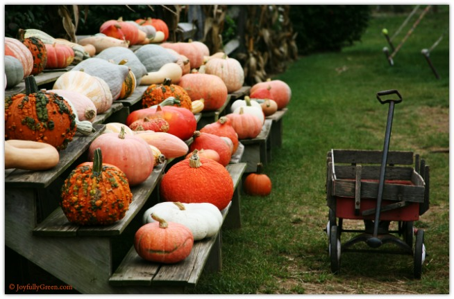 Wagon and Gourds © Joyfully Green LLC