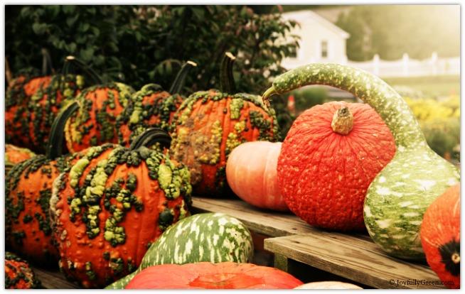 Pumpkins and Gourds © Joyfully Green LLC