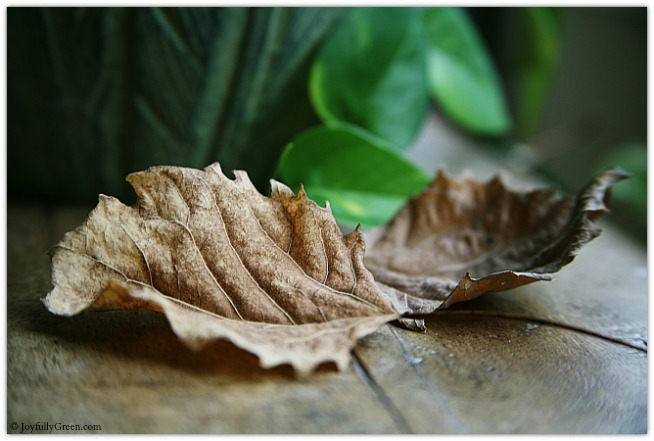 Leaves © Joyfully Green LLC