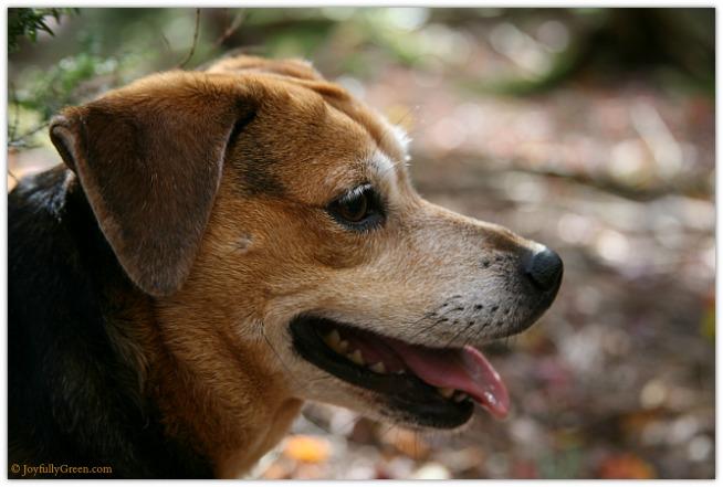 Catskills Dog 4225 © Joyfully Green LLC